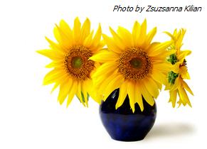 Sunflower-in-Vase